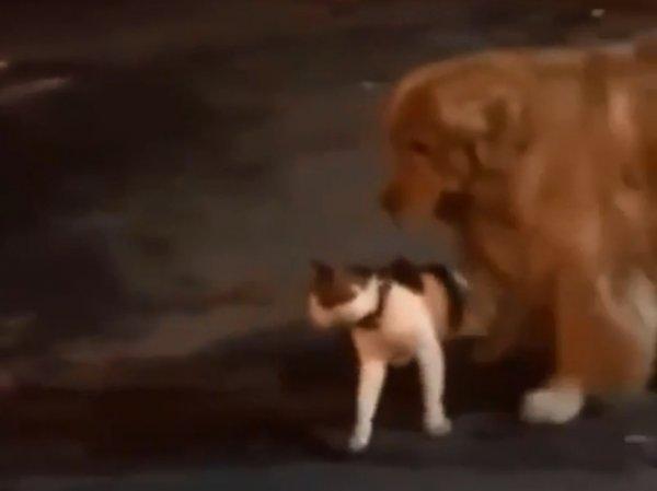 Пес уберег кота от потасовки и стал звездой на YouTube