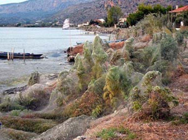 Нашествие пауков в Греции: паутина окутала популярный курорт