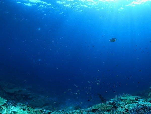 Уфологи нашли загадочные следы на самом дне Тихого океана, засняв их на фото