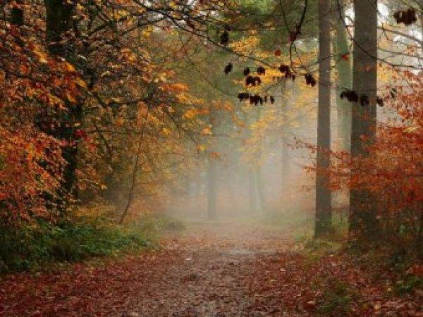 Какой сегодня праздник 28 октября 2018: церковный праздник Ефимий Осенний отмечается в России 28.10.2018
