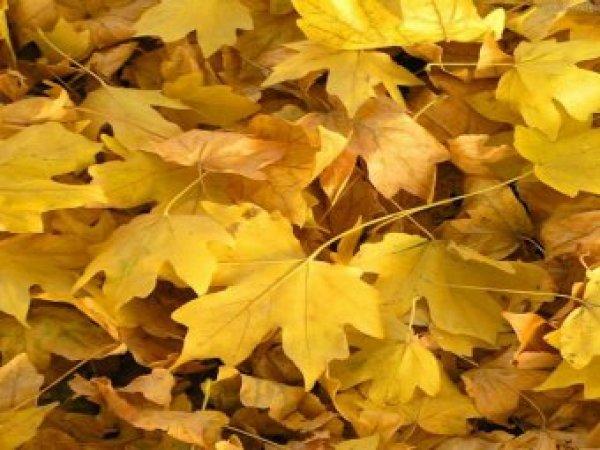 Какой сегодня праздник: 5 октября 2018 года отмечается церковный праздник Иона и Фока (Листопадная)