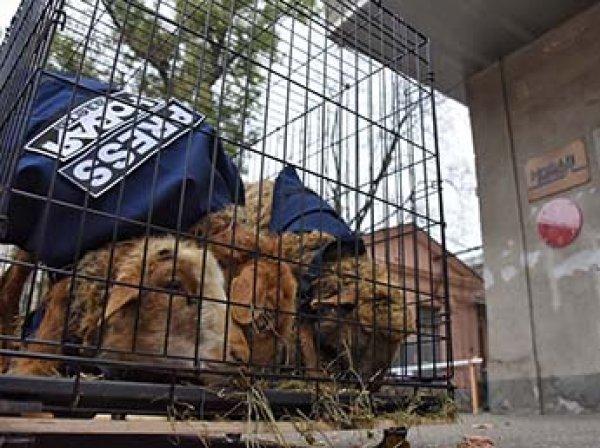 """После отрезанной головы и венка к редакции """"Новой газеты"""" привезли овец в клетках"""