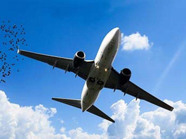В небе над Москвой чудом не столкнулись два пассажирских лайнера
