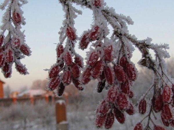 На этой неделе в Россию придут 33-градусные морозы
