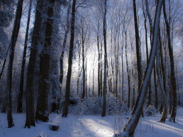 В Хабаровском крае трехлетний мальчик в 35-градусный мороз самостоятельно выбрался из леса
