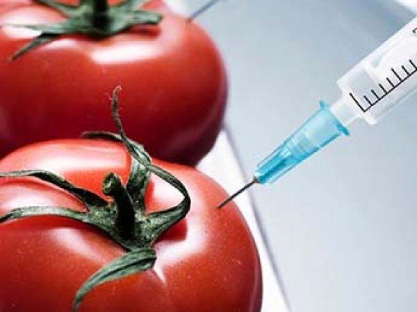 Ученые выяснили, как продукты с ГМО влияют на ДНК человека