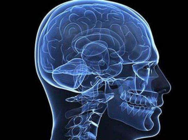 Ученые нашли способ улучшить работу мозга и память