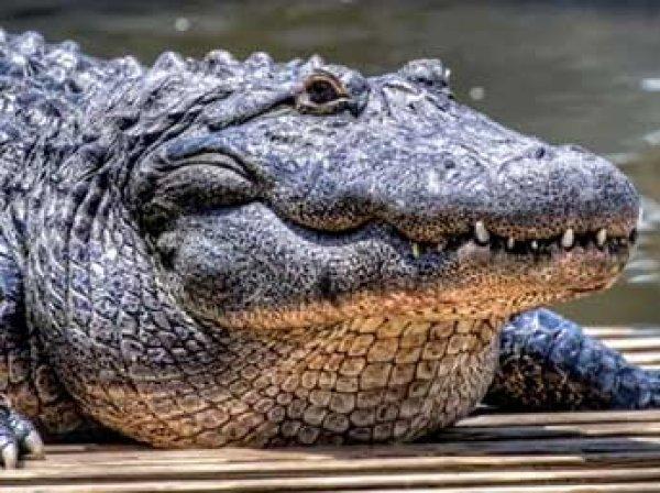 Крокодил заживо съел охотника на глазах у племянника