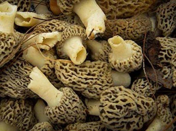 Женщина насмерть отравилась грибами в ресторане с мишленовской звездой