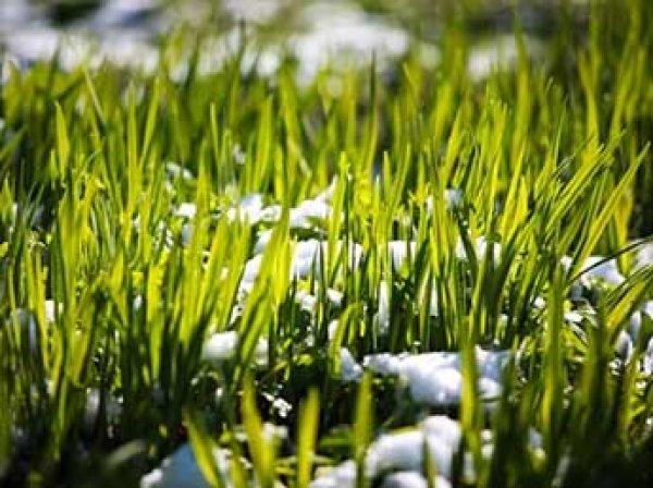 Синоптики рассказали, когда в Москву придет настоящая весна