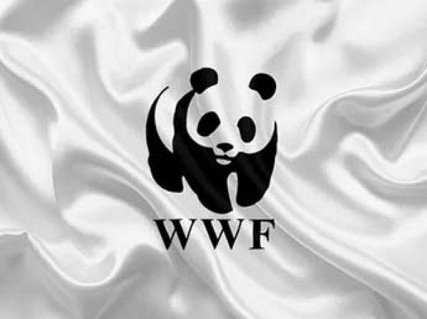 Всемирный фонд дикой природы обвинили в пытках и убийстве браконьеров