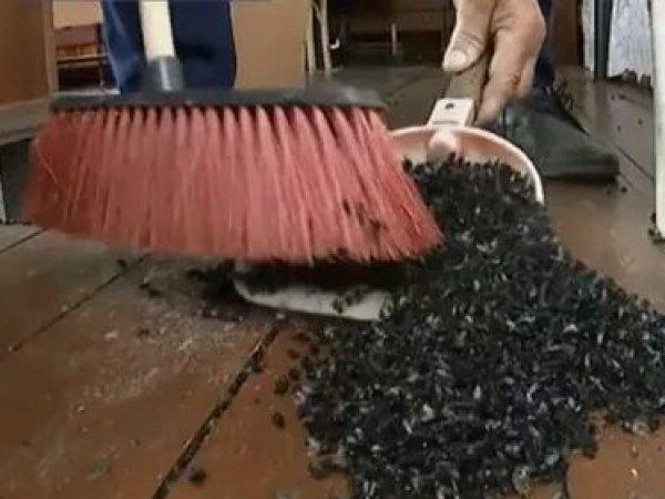 Полчища навозных мух, атаковавшие поселок на Урале, напомнили фильм ужасов (ВИДЕО)