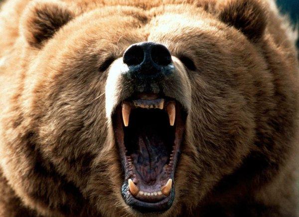 Истерзанный медведем житель Тувы чудом выжил, пролежав месяц в берлоге как запас еды (ФОТО)