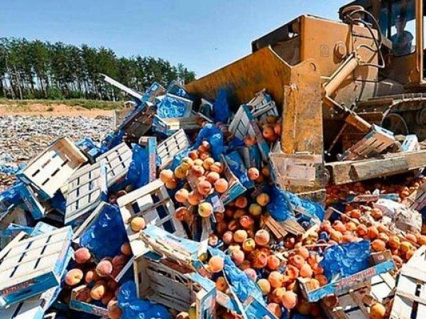 Роспотребнадзоре предложили запретить уничтожение продуктов питания