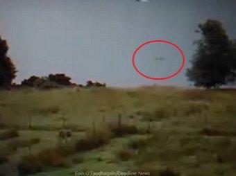 Видео сразу с двумя Лох-несскими чудовищами удивило Сеть