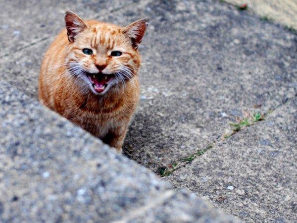 В Москве произошло массовое отравление кошек