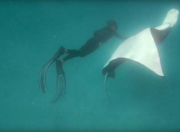 Раненный морской дьявол попросил помощи у дайверов, попав на видео