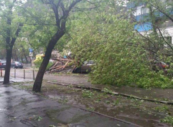 В центре Москвы деревом задавило ребенка (ВИДЕО)