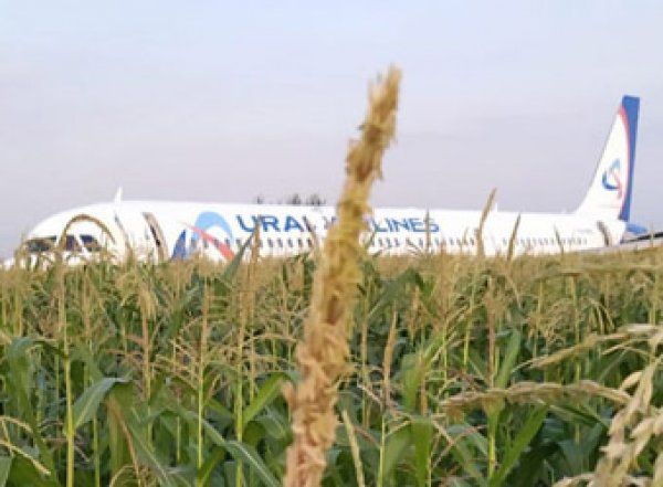 "Западные СМИ назвали посадку А321 ""чудом на кукурузном поле"""