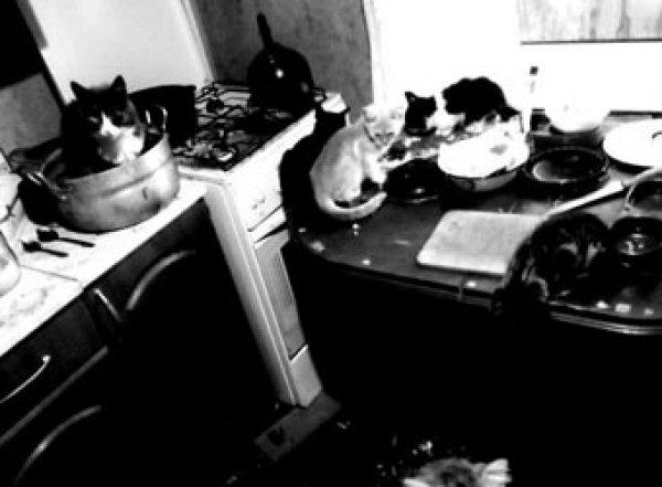В Ростовской области психопат-живодер расчленял животных в квартире-приюте