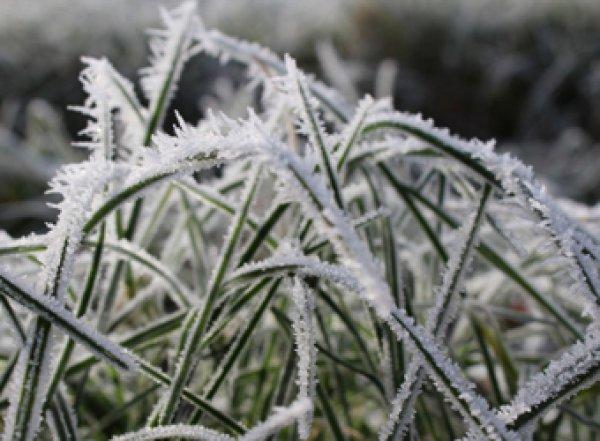Гидрометцентр предупредил о заморозках и дожде со снегом