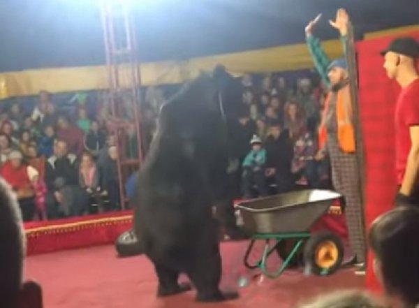 В Карелии во время представления в цирке медведь напал на дрессировщика