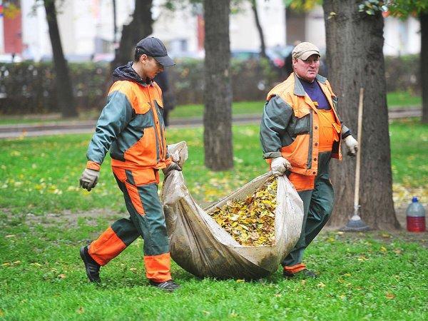 СМИ: мэрия Москвы потратила 850 млн за вывоз опавших листьев, которые нельзя собирать