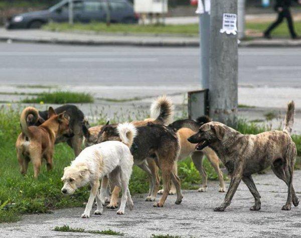 В Воронеже собаки играли человеческой головой во дворе жилого дома