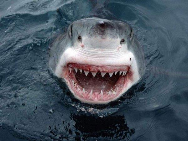 У берегов Австралии акулы съели немецкого футболиста