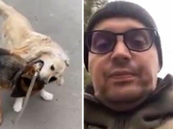 """""""Давай, май нигга!"""": Гуф натравил свою собаку на ретривера, возмутив Сеть (ВИДЕО)"""