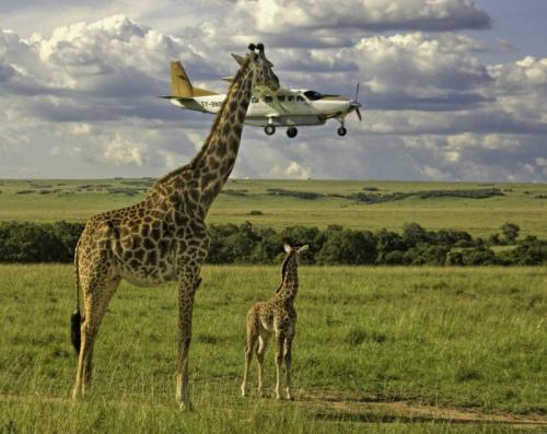 20 лучших снимков конкурса Comedy Wildlife Photography Awards 2017