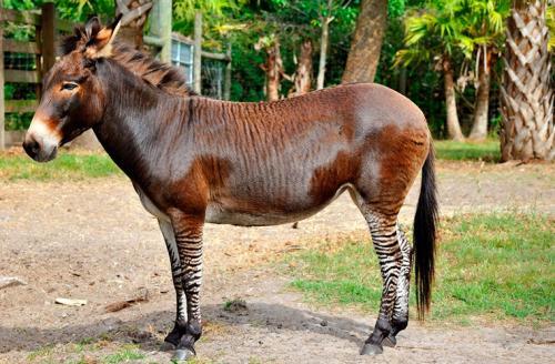 Удивительные животные – гибриды