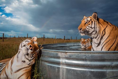 Лучшие фотографии National Geographic 2019