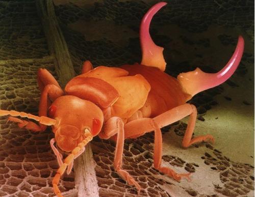 Самые ужасные микроскопические монстры