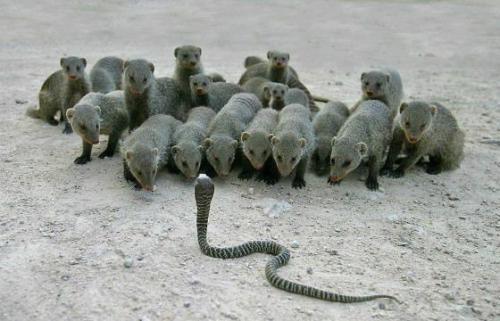 Самые ядовитые существа в мире