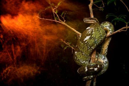 Лучшие фото природы от Британского экологического общества