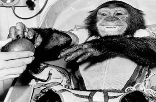 Животные, которые повлияли на историю