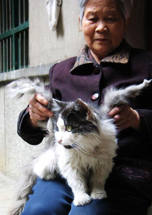 В Китае объявился крылатый кот