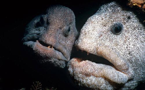 Самые страшные и странные обитатели океана