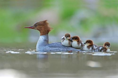 25 лучших фотографий птиц с конкурса Bird Photographer of the Year 2017