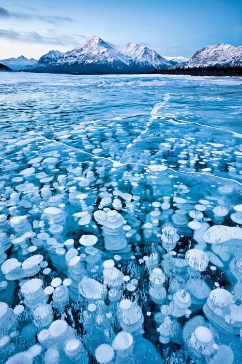 Огнеопасные ледяные пузыри. Попавшие в ледяную ловушку озера Абрахам пузыри метана. Чудо находится в канадской провинции Альберта.