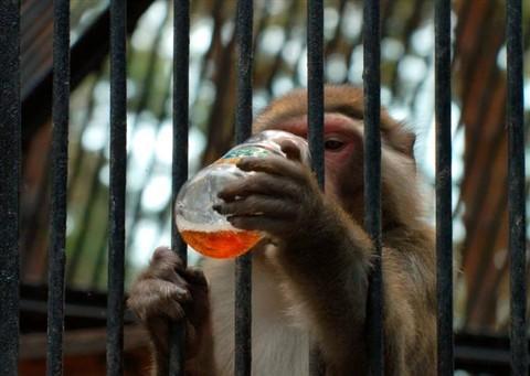 Невероятные истории о животных-преступниках