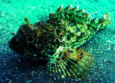 Самые ядовитые подводные обитатели планеты