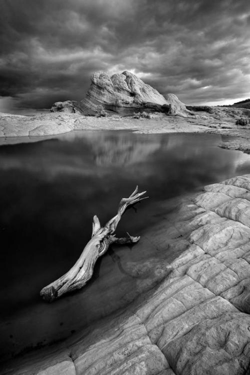 Лучшие работы с конкурса инфракрасной фотографии Life in Another Light