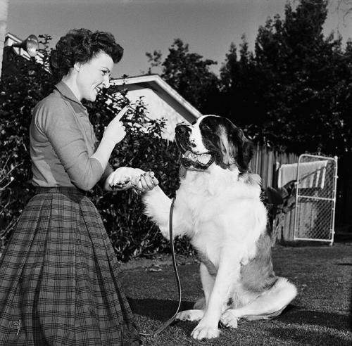 Знаменитости со своими собаками