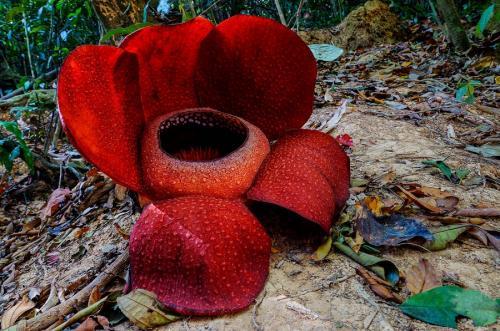 Удивительные растения нашей планеты