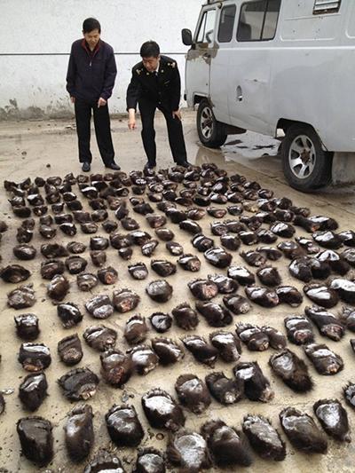 Контрабанда медвежьих лап из России