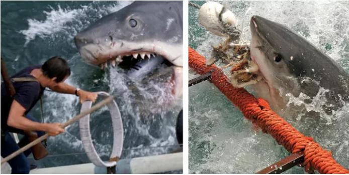 7) Челюсти (1975) За лето 1916 года огромная белая акула растерзала пять человек. Именно этот инцидент лег в основу нашумевшего фильма «Челюсти».