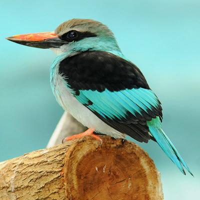 150 самых красивых птиц в мире