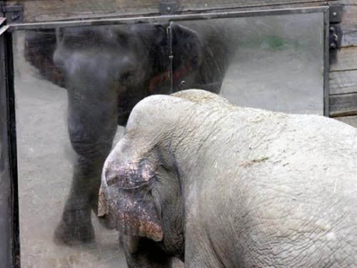 Поразительные примеры изобретательности животных